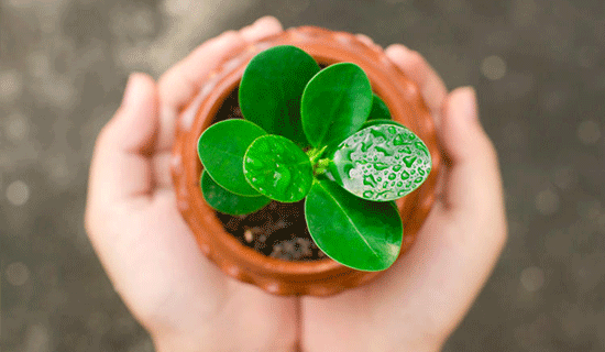 Manos y plantita que representan la Responsabilidad Social Corporativa